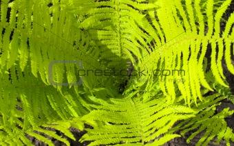 Environment background of seedlings