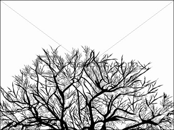 Black And White Background - Black tree on white background