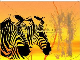 PHOTO zebra background
