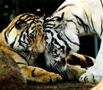 Wild Animal have love also