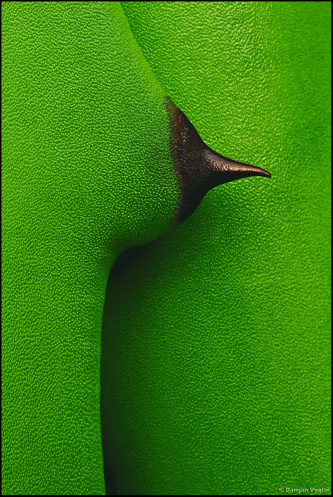 NIPPLE by damyan