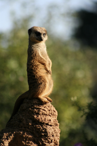 Oh yeah...you know you want it by shibbay