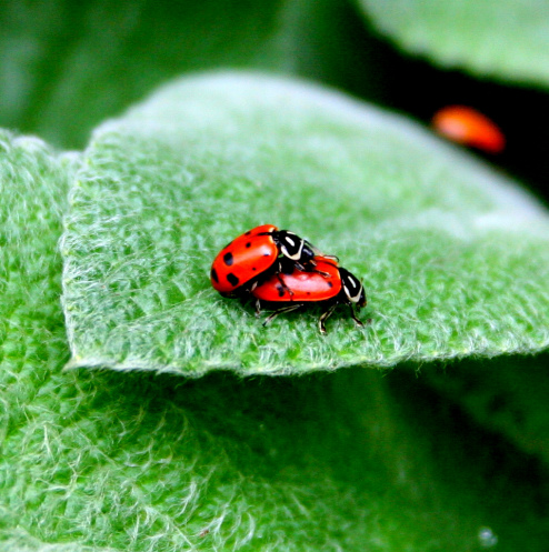 Lovy bugs by Frankierio