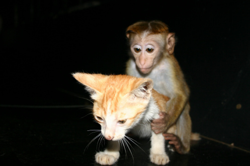 Bimbo and his big love by Wolfgang