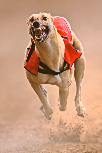 Sprinting greyhound by EcoShow