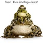 frog question
