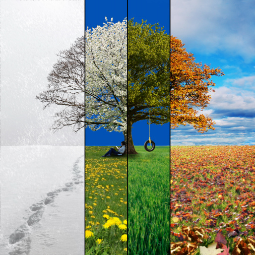 Tree For All Seasons By John Newcomb Fine art | Getty Images