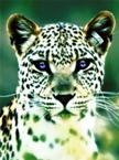 The Million Dollar Leopard