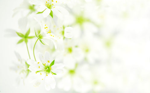 flower background pictures. flower background wallpaper.