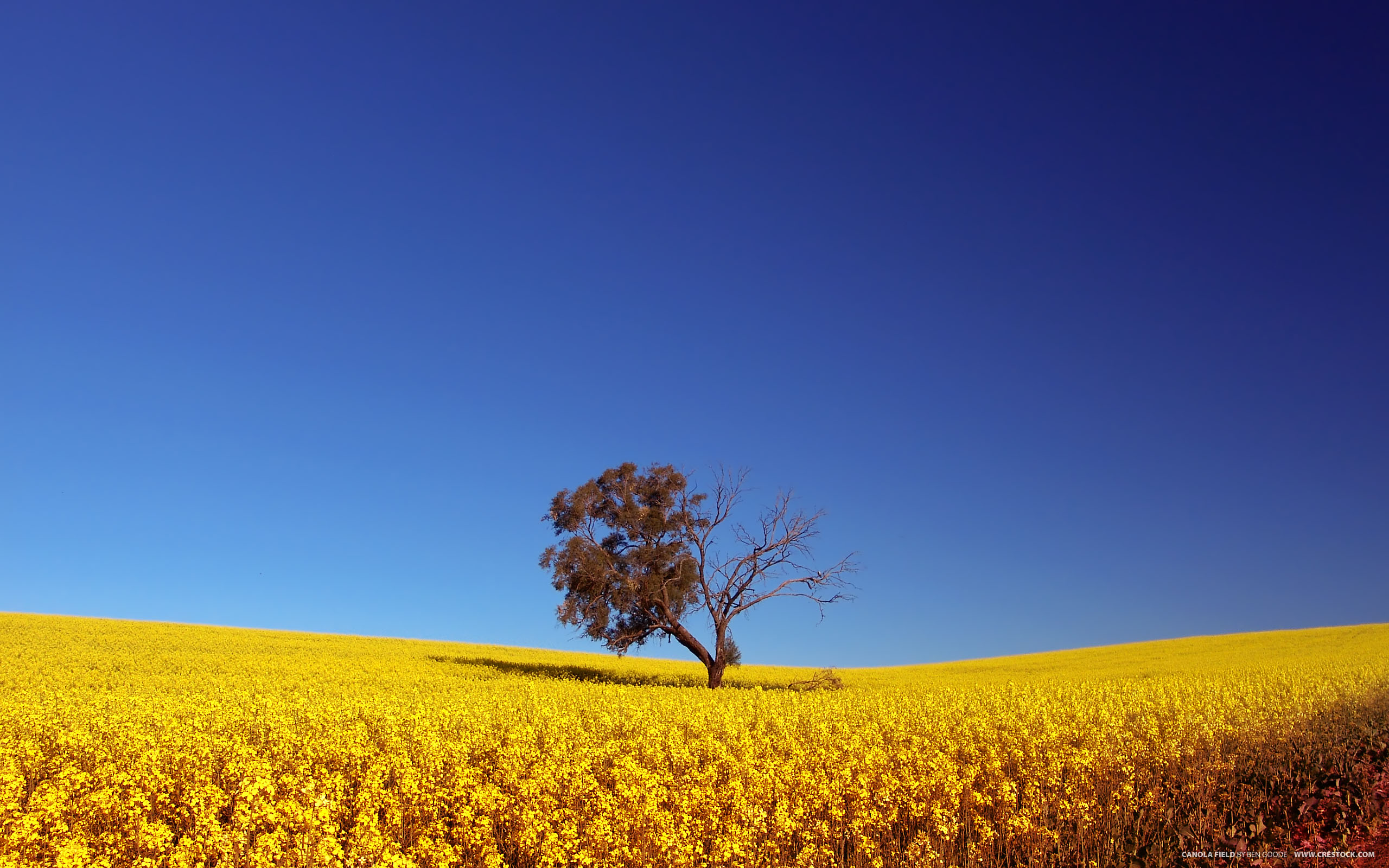 Обои Дерево, поле, небо для рабочего стола - картинка #12490, скачать